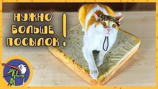 Котик Рыжик - ШОПОГОЛИК