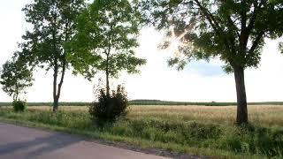 On the road - Mick Douglas - En la carretera - Birdy Records - Música relajante