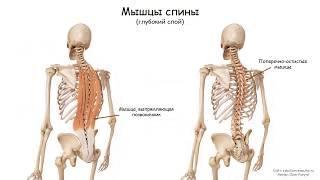Массаж спины (краткая теория) | Урок 27, часть 1 | Уроки массажа
